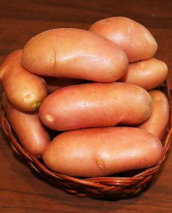 Картофель семенной. Купить семена картофеля с доставкой почтой